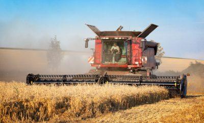 трактор уборка поле пшеница
