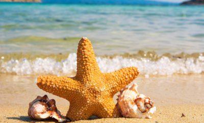 морская звезда поре пляж песок