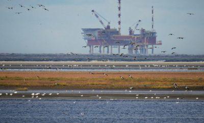 Озеро Море Северное Море Нефтяная Вышка Птицы