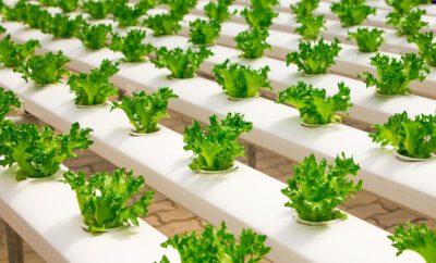 Телпичные овощи