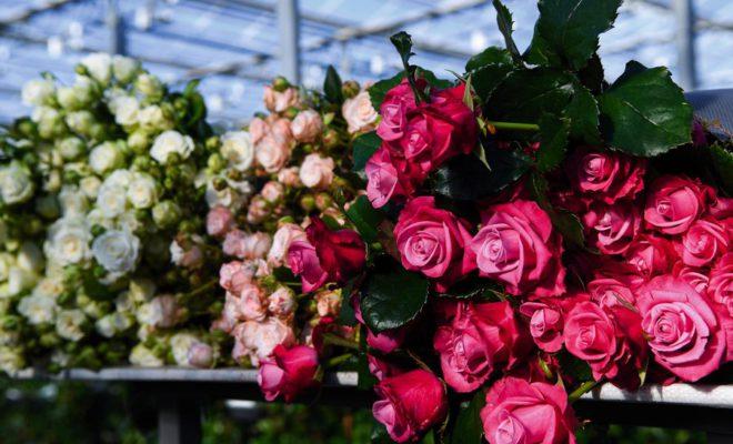 «Зеленый дом» — территория роз